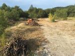 25 - decespugliamento di area boscata.jpg